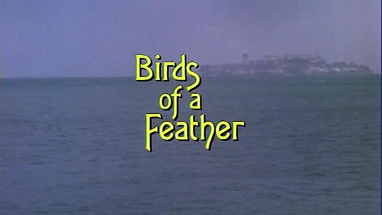 Saga Fletcher – Capítulo 3: Os pássaros de uma pena