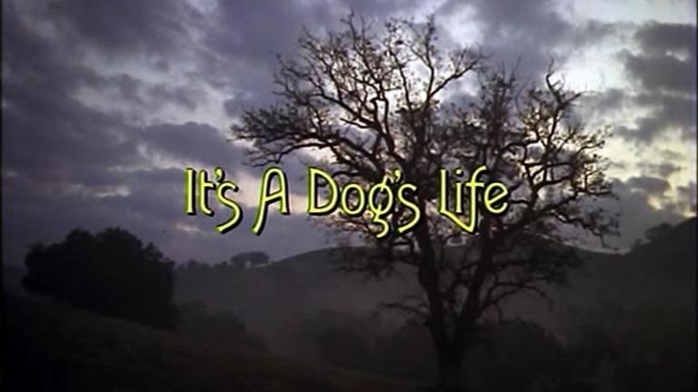 Saga Fletcher – Capítulo 5: É uma vida de cão